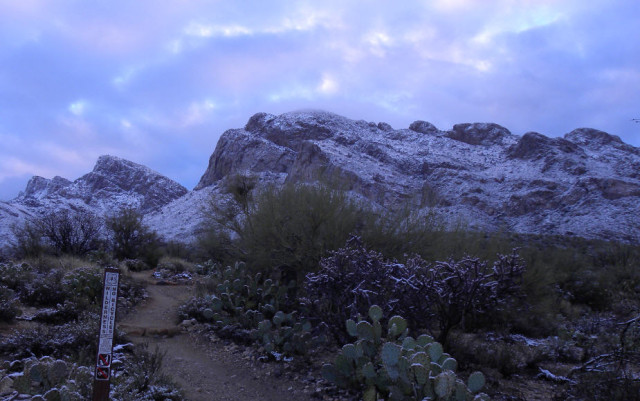 Morning Twilight at Pusch Ridge Wilderness - Tucson, Arizona