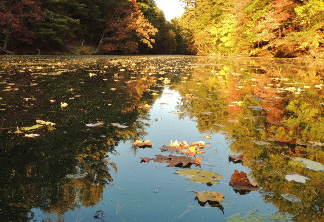 My Wisconsin Space 187 Floating Leaves On Mirror Lake