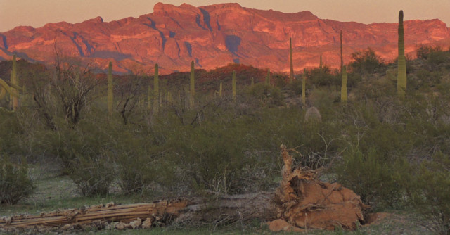 Evening Twilight, Organ Pipe Cactus National Monument - Ajo, Arizona
