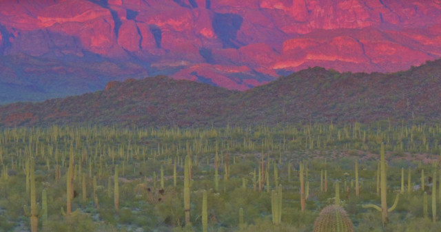 Alpenglow on the Ajo Range, Organ Pipe Cactus National Monument - Ajo, Arizona